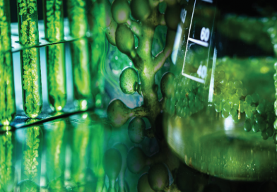 Reengineering Photosynthesis